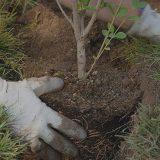 New Tree Planting